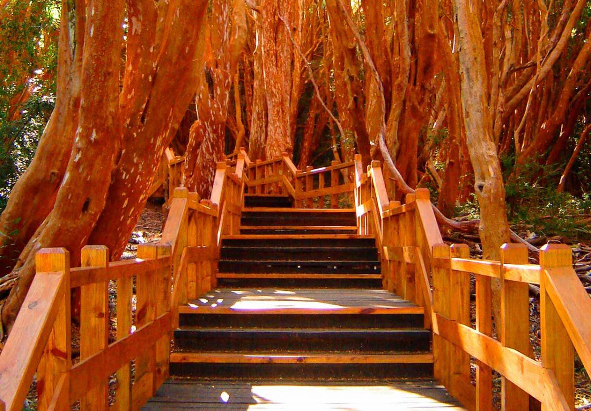 Parque Nacional Bosque de los Arrayanes